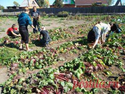 Надписью ничего, картинки сбор урожая на огороде