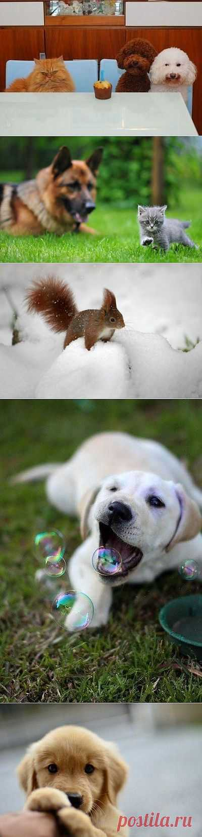 Забавные животные. Супер!   Всё самое лучшее из интернета