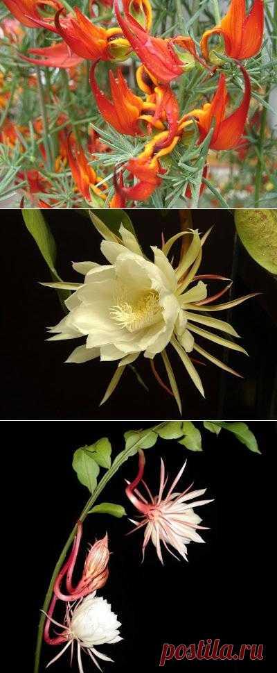 Редкие и удивительные цветы мира