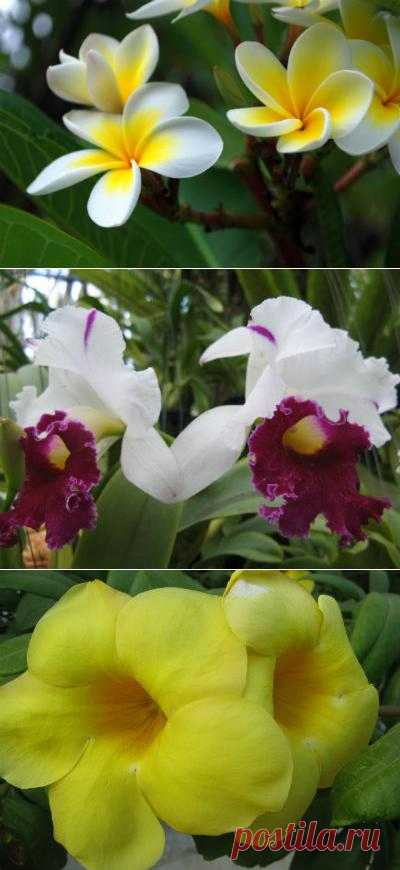 Самые обычные цветы Таиланда