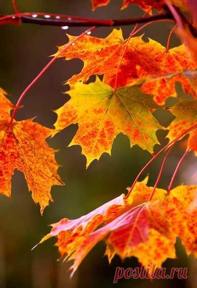 С добрым утром! – листья кружатся шурша, С добрым утром! – поет ветер не спеша, С добрым утром! – каплет дождик с наших крыш, Хорошо, что ты нисколько не грустишь! Знаешь ты, что осень – дивная пора, Ты настройся на отличный день с утра. Все получится сегодня, улыбнись, И к осенней сказке нежно прикоснись!