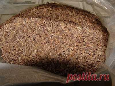 Полезные советы: Чтобы забыть о давлении нужно взять горсть семян укропа.