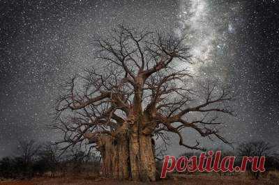 Так выглядят самые старые деревья на планете (Фото) - Удиви.ли! - Интересные новости