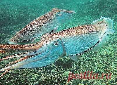 Обитатели подводного мира в Оманском заливе | Фуджейра