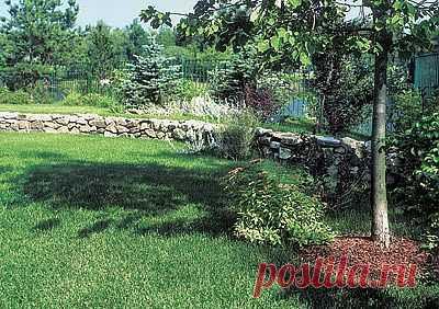 Как вырастить газон | Дом-Цветник