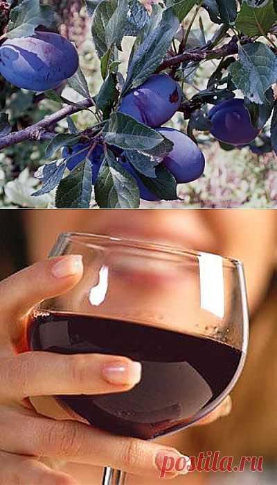 Сливовое вино без спирта. Комментарии