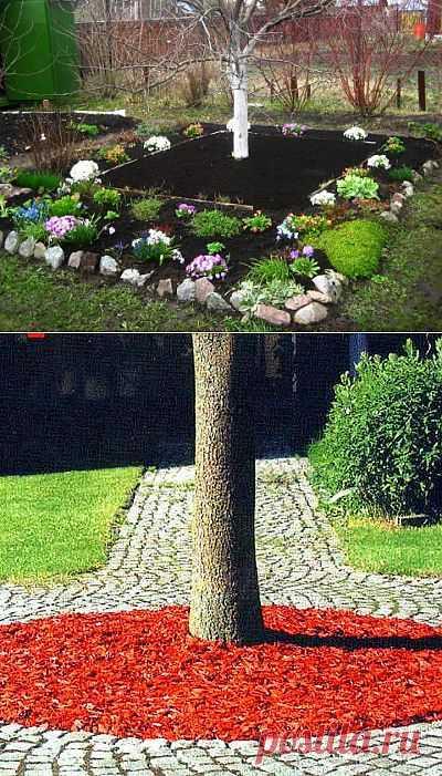 Приствольный круг плодовых деревьев. Садовод не должен забывать о приствольном круге, ведь он необходим для здорового роста дерева.