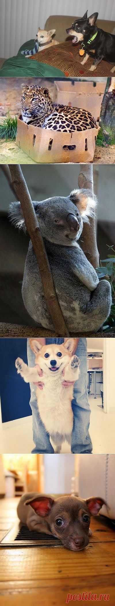 Забавные животные. Новая часть   Всё самое лучшее из интернета