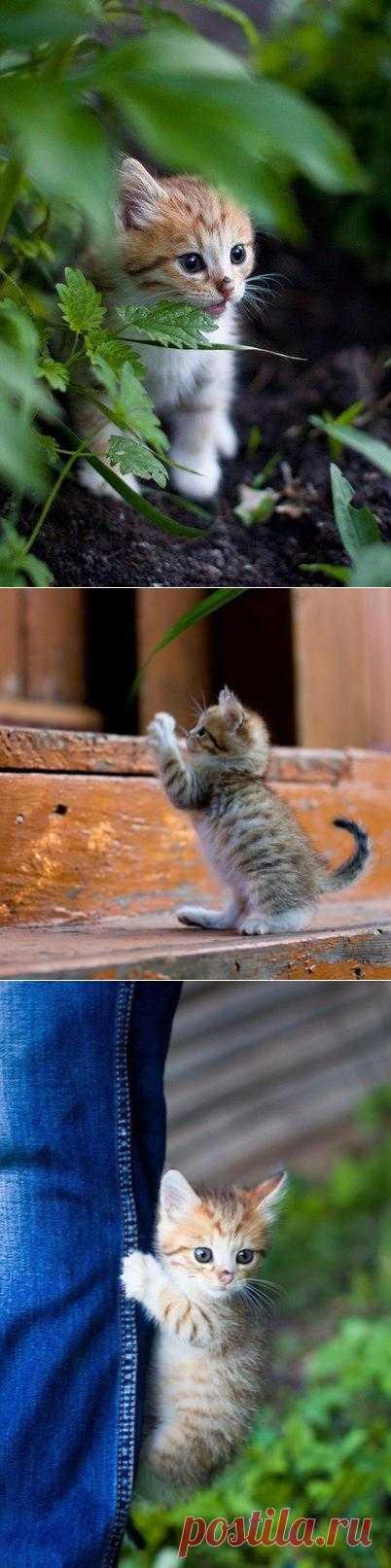 Чудесный котенок!!!