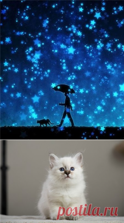Cats for zodiac signs - Psychology. Esoterics. Zodiac. - The ROOM - the digest of news, author's blogs