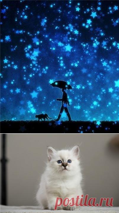 Las gatas para los signos del zodíaco - la Psicología. Las obras esotéricas. El zodíaco. - el APOSENTO - la selección de las novedades, los blogs de autor