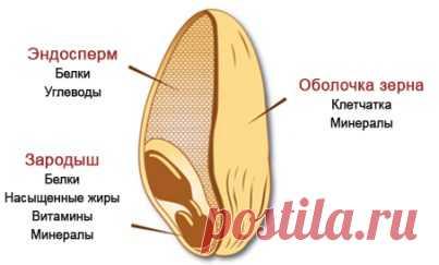 Пост от нашей yuliana77. Рассказываем, правда ли цельнозерновые продукты такие полезные, и как отличить их на полке в магазине.