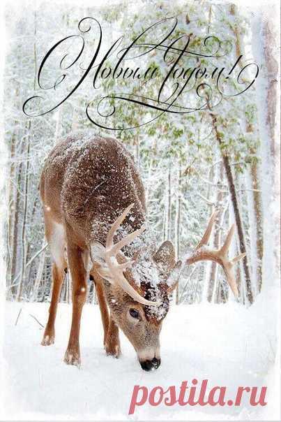Новогодние карточки