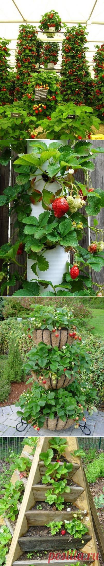 Вертикальный способ выращивания клубники