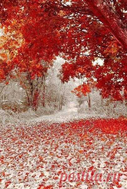 Зима и листопад встретились в один день! Осень в штате Миннесота