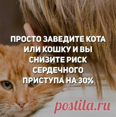У котиков одни плюсы