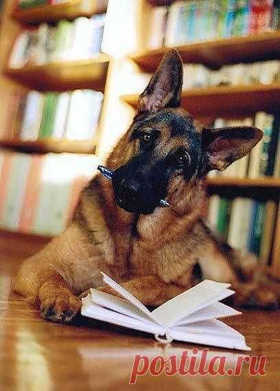 Читающая овчарка Dog | Dog