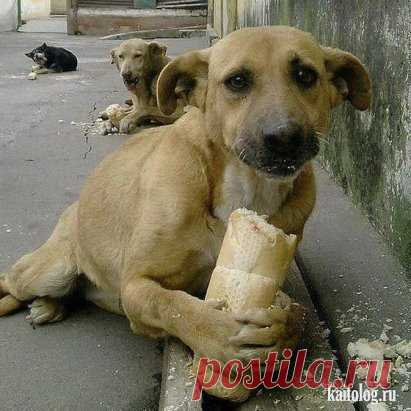 Never feel sorry for a piece of bread for a homeless dog, for you this piece - that, and for it is life. put a class if you are not fleecers