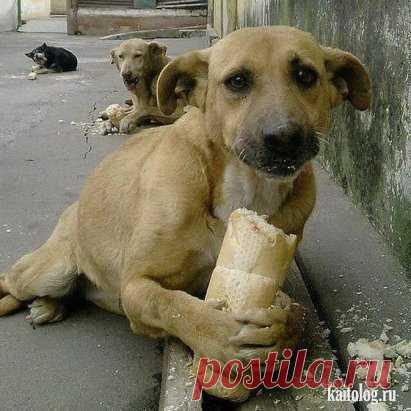Никогда  не  жалей  куска  хлеба  для  бездомного  пса,  ведь  для  тебя  этот  кусок  -  ни  что,  а  для  него  -  это  жизнь. поставте класс если  вы  не живодеры