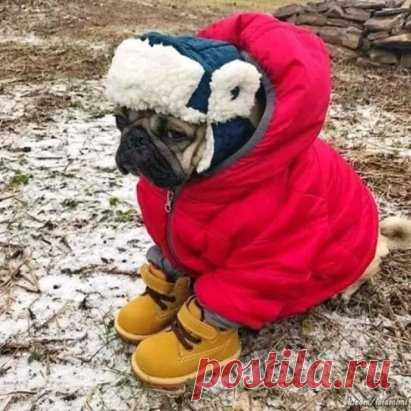 Оделся... А снега все нету(