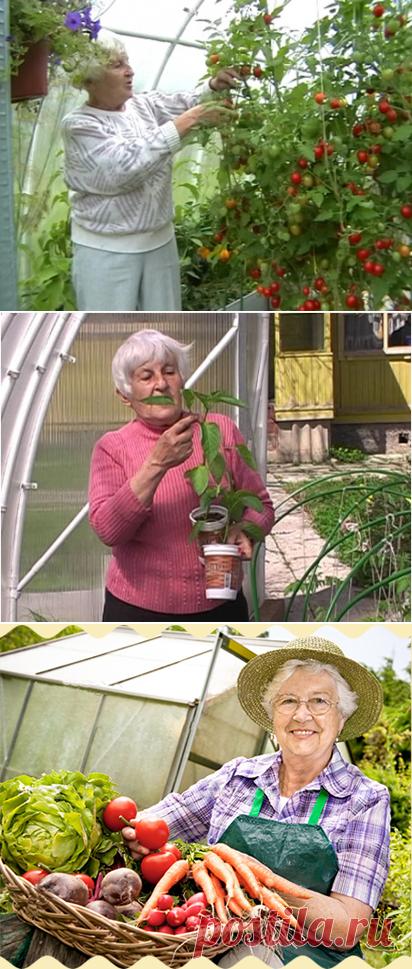 огород без хлопот для пожилых фото тиски можно купить