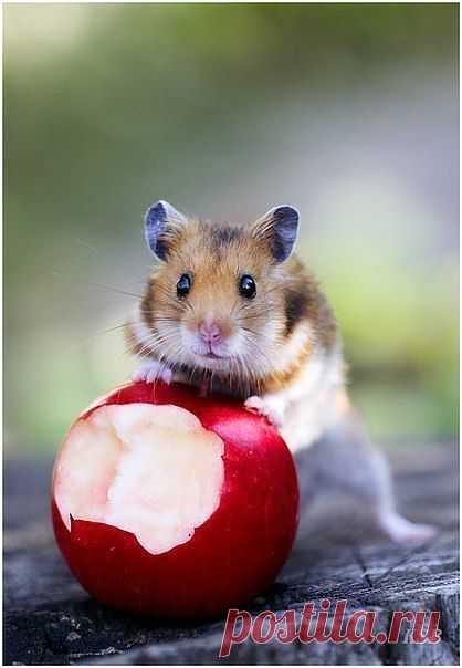 Чье яблоко?