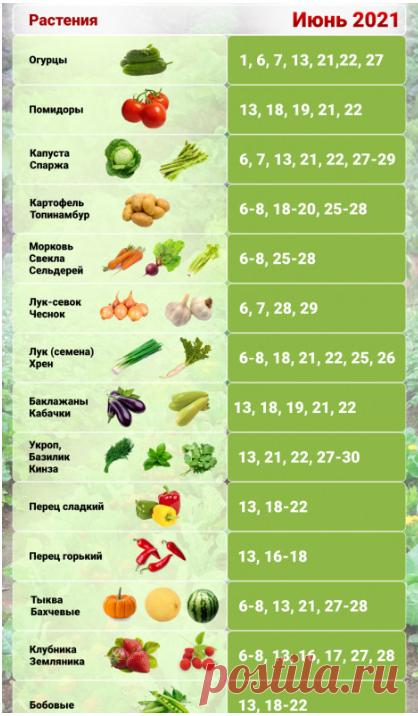 Что ещё можно посеять до 10 июня и получить полноценный урожай + Посевной календарь на июнь 2021 | Дачная задача | Яндекс Дзен