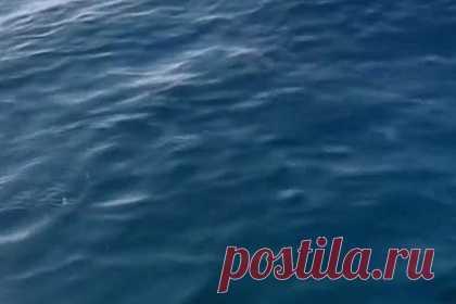 Двухметровая акула напугала рыбака и попала на видео. 21-летний рыбак ловил рыбу в порту Падстоу на северном побережье Корнуолла, когда к его маленькой надувной моторной лодке неожиданно подплыла двухметровая атлантическая сельдевая акула. Мужчина был одновременно обрадован и напуган встречей с редким хищником. Ему удалось запечатлеть этот момент на видео.