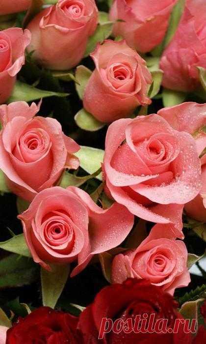 Как создать запах цветов в комнате.