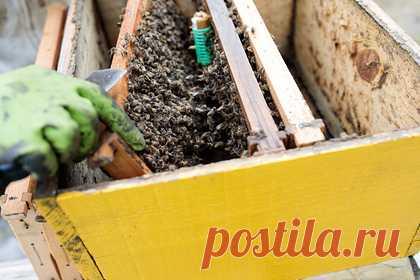 В российском регионе произошла массовая гибель пчел. В нескольких районах Башкирии произошла массовая гибель пчел. Предположительно, причиной стала обработка полей пестицидами и агрохимикатами сельхозпредприятиями. В Россельхознадзор продолжают поступать обращения граждан в связи массовой гибелью пчел. Аналогичная ситуация была в российском регионе в июне.