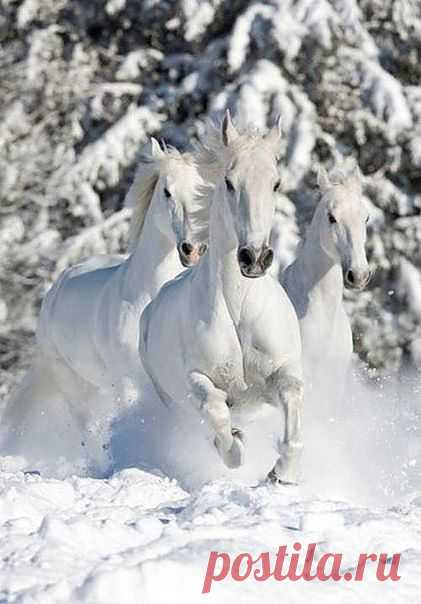 white \/ animal \/ its velichestvo-Loshad \/ Pinme.ru \/ Tatyana Sadovedova