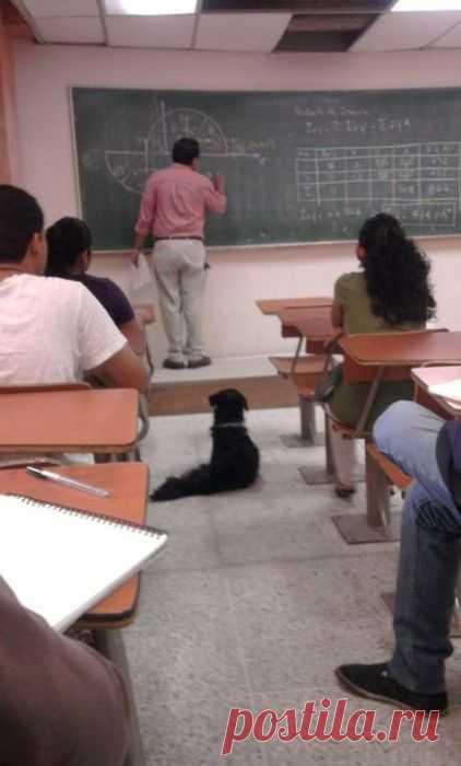 Рейтинг обучаемости собак разных пород (для перехода по ссылке нажмите на картинку)