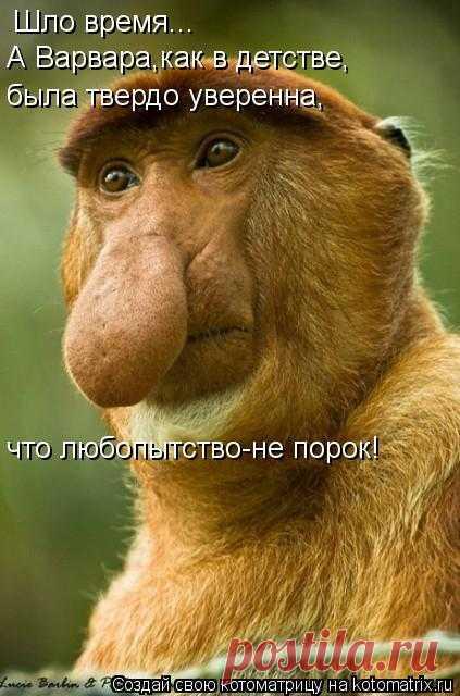 "ВЕСЕЛАЯ ""ЗВЕРоКОТоМАТРИЦА"""