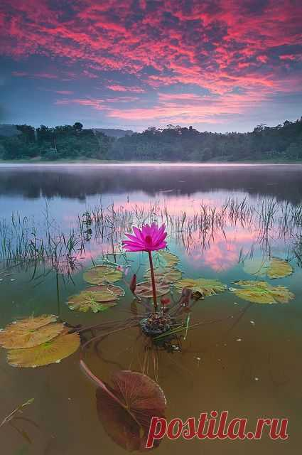 Lily pads.  \u000d\u000aFlickr - Photo Sharing! from Flickr - Photo Sharing! | Pinterest • World catalog of ideas