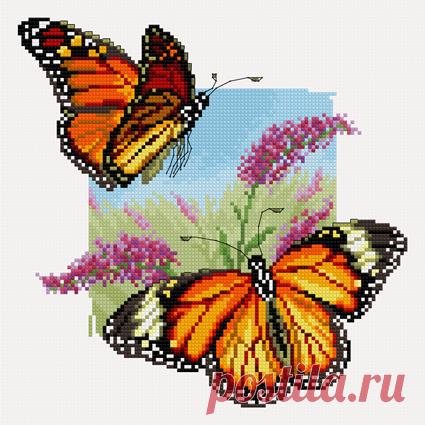 в/к Бабочки