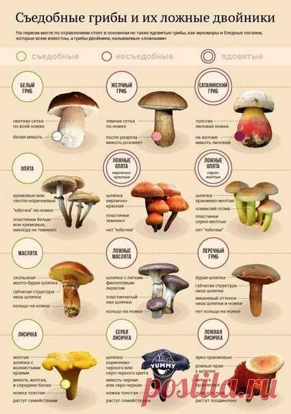 Кто любит тихую охоту они по лучше нас знают, так ли эти грибы ядовитые.