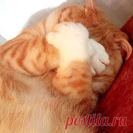 Ой, как же тут все вкусно, смотрю и слюнки текут.  http://invkus.blogspot.ru/