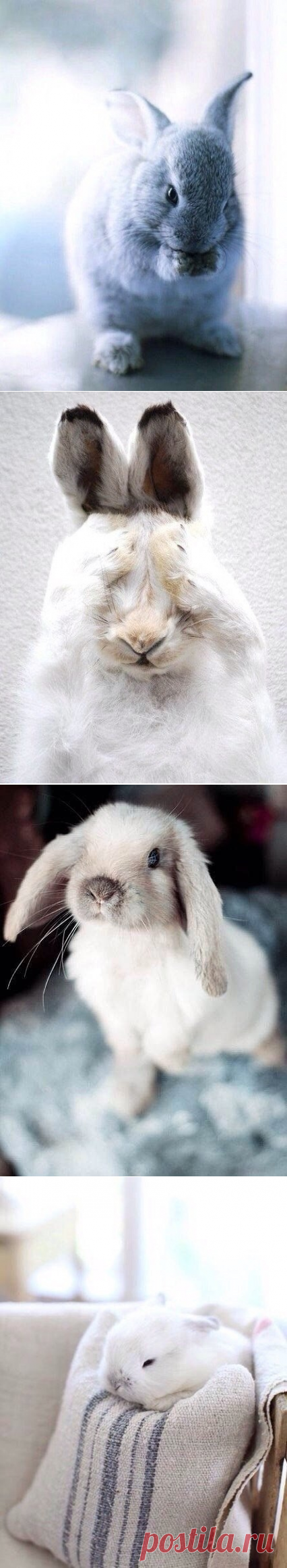 Hares)