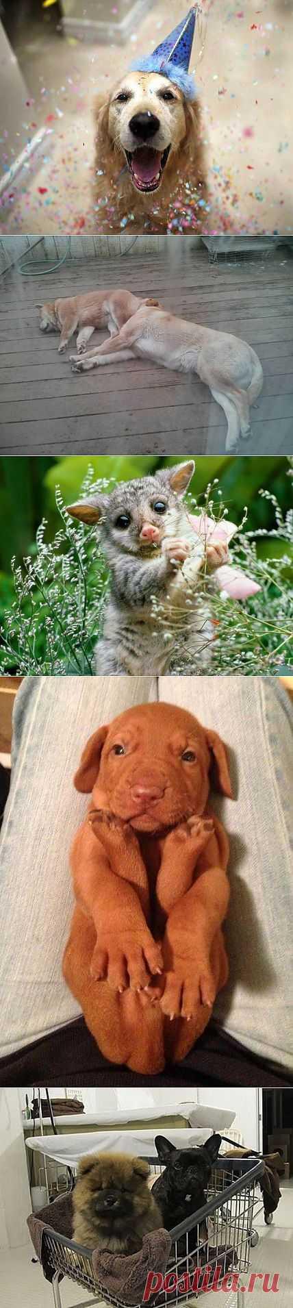 Очень забавные животные. Свежее | Всё самое лучшее из интернета