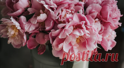 12 amazing facts about peonies which you never heard