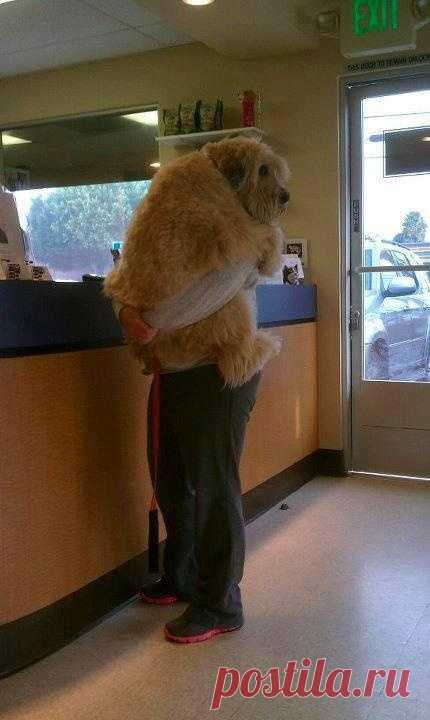 The dog is afraid of the veterinarian as the stomatologist's child. Very touchingly)\u000d\u000aPhoto from the British clinic