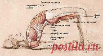 Интересные новости      Ровная красивая спина,