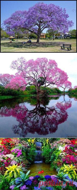 (+1) - Фиалковое дерево | Хвастуны и хвастушки