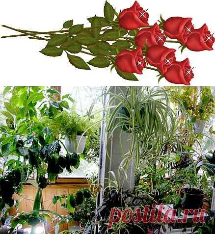 10 растений, которые принесут в ваш дом любовь..