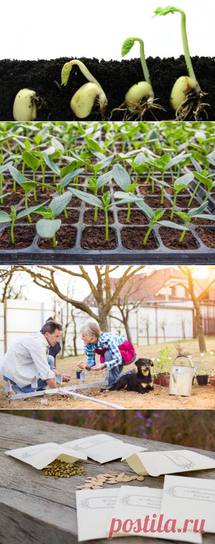 Как определить сроки посева семян овощных культур на рассаду? | Растения