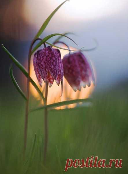 Так всегда бывает весной: посмотри как прекрасен мир! В такое время мне бывает жаль, что я не родился бабочкой... или цветком...  © Редьярд Киплинг,