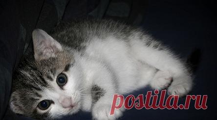 коронавирус у кошки возбудитель симптомы лечение наши