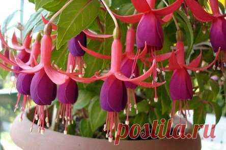 Самые красивые комнатные цветы: фото и названия (каталог)