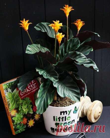 8 идеальных растений для темной комнаты | 6 соток