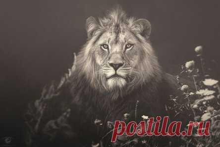 Задушевные портреты животных от Мануэлы Кульпа